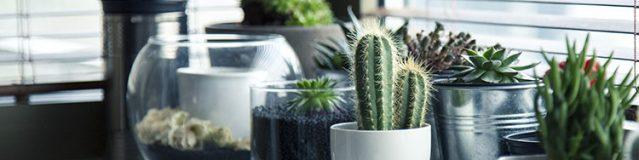 Las 3 claves para una decoración sostenible